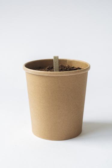 seed stick reuse package organic herbs grow