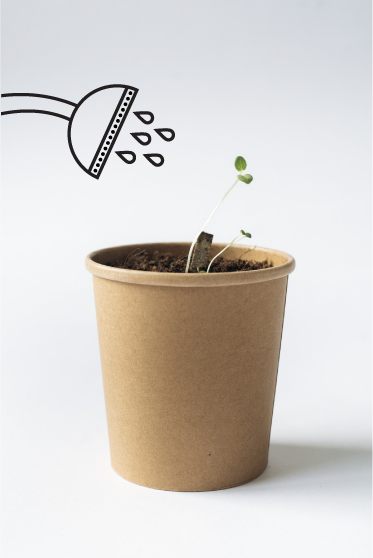 seedstick grow herbs reuse biodegradable concept package