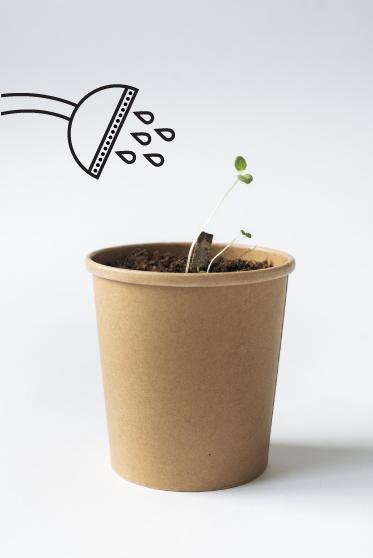 seedstick grow herbs reuse biodegradable concept package