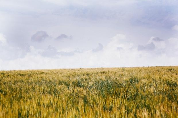 agros ecosystem rhoeco