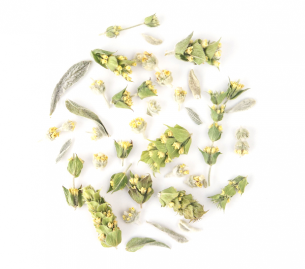 mountain tea sideritis greek loose leaf organic herbal