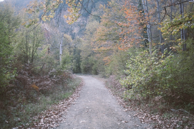 mountain ecosystem rhoeco