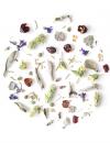 organic herbal blend mix loose leaf herbs rhoeco