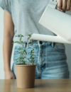 rhoeco plant it reusable packaging
